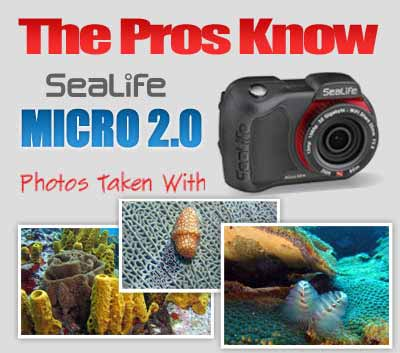 Underwater Photos taken with Micro 2.0